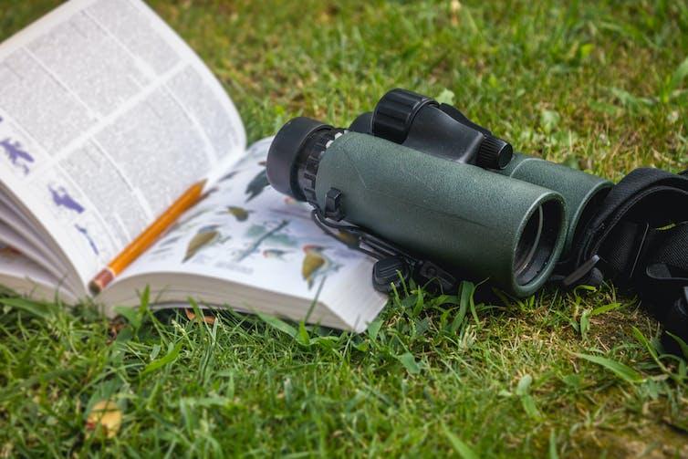 binoculars and birdwatching guide