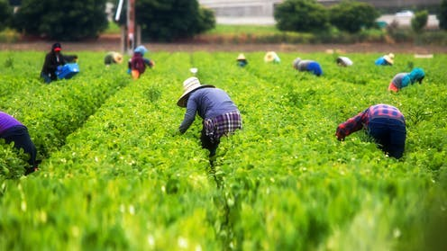 Why Australian unions should welcome the new Agricultural Visa
