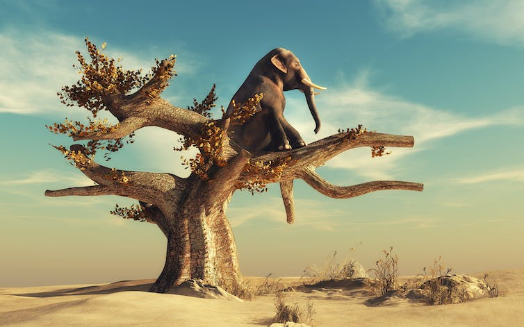 An elephant sitting in a tree.
