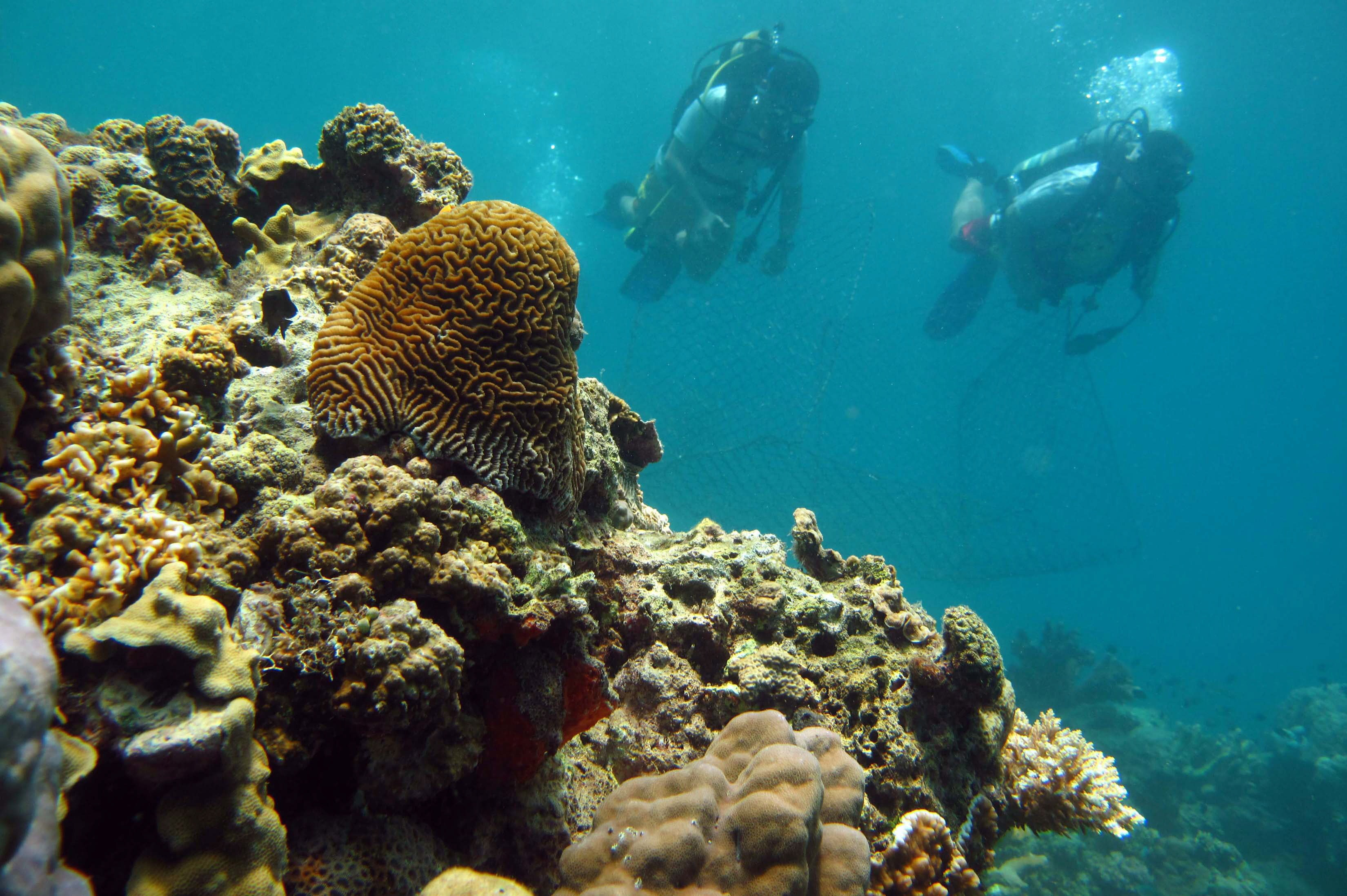 benefits of artificial reefs essay Unique medicinal properties of coral reef organisms were recognized by coral reefs are home to sessile plants and despite these potential benefits.