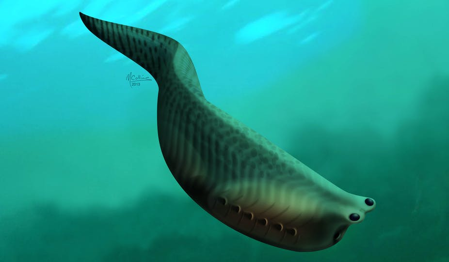 The Oldest Fish In The World Lived 500 Million Years Ago