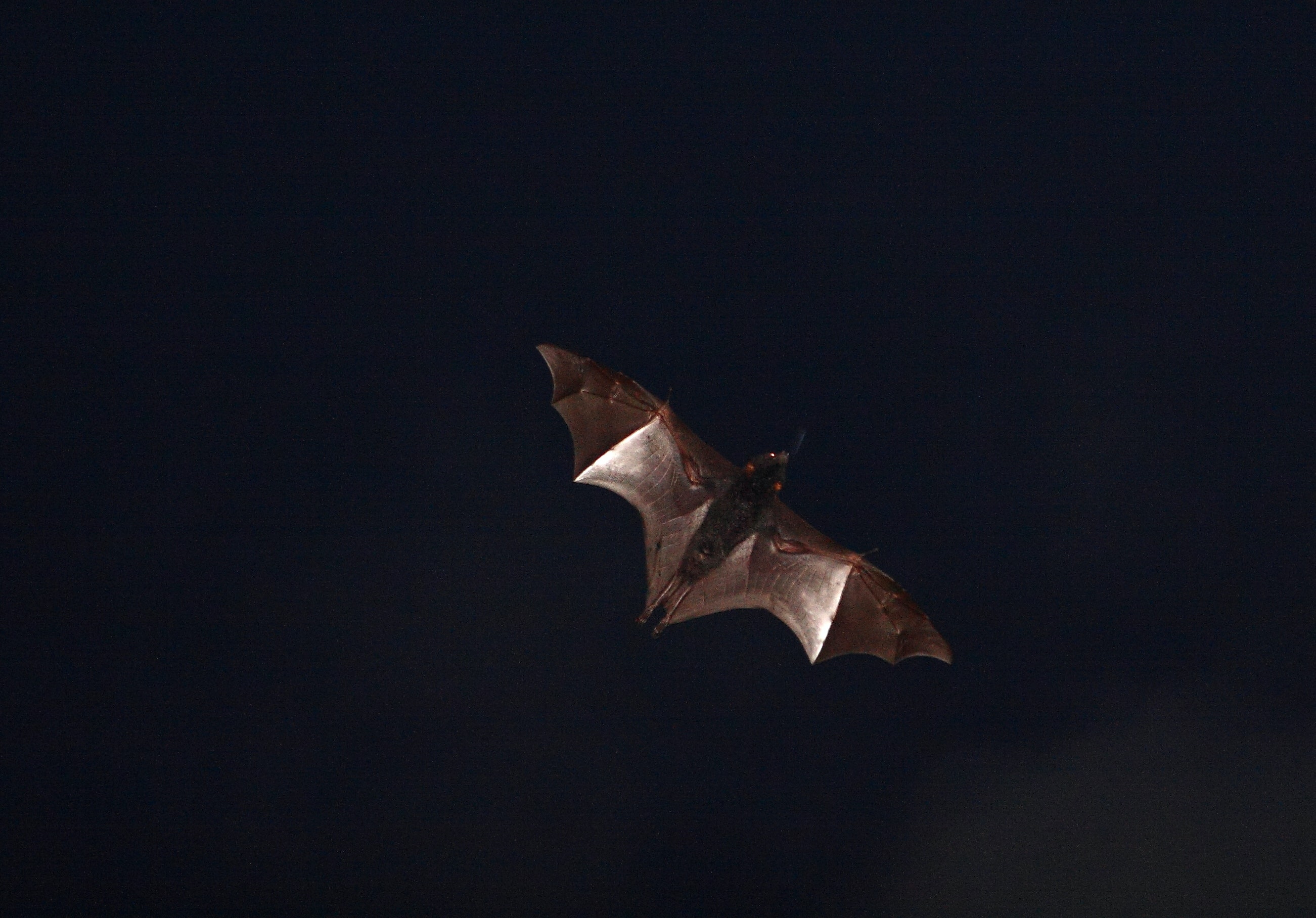 revealed bats use sunsets to reset their magnetic compasses and