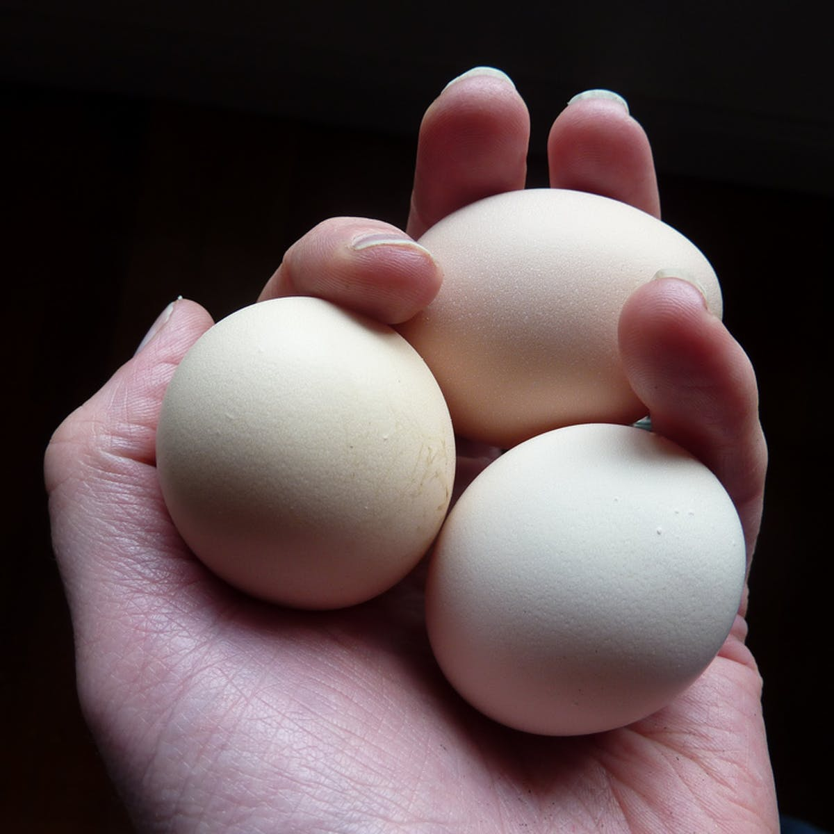 Don't get eggs-cited about free range: the realities of