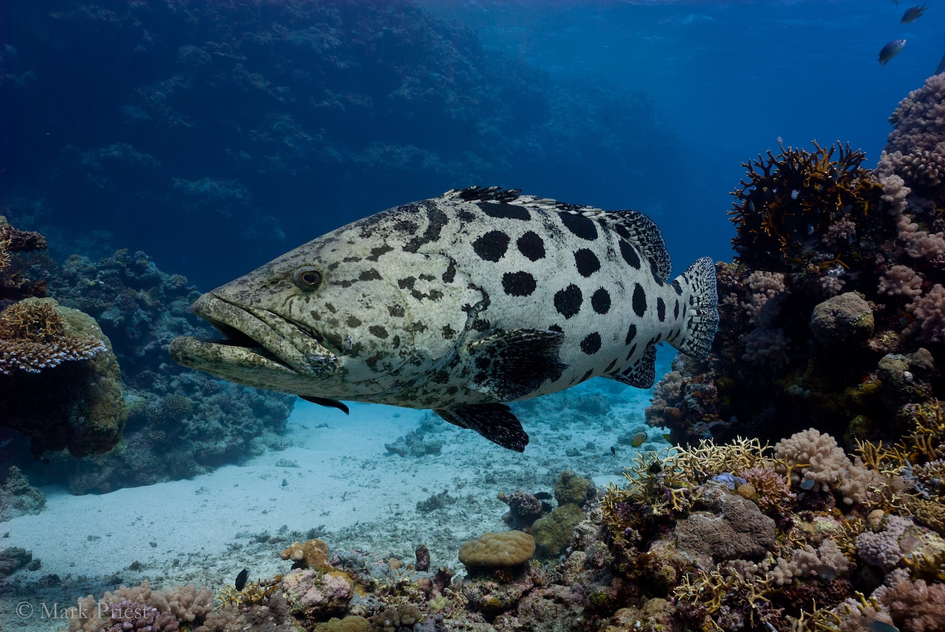 Rock Cod Fish | How Ecosystems Can Keep Their Fish And We Can Eat Them Too