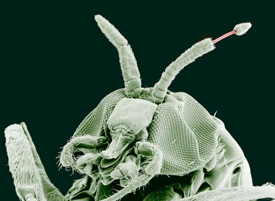 gegen parasiten bei menschen