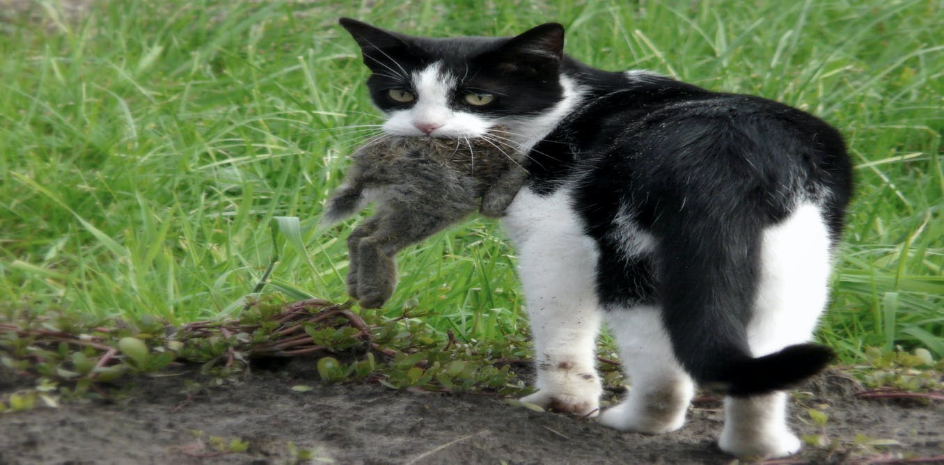 how to kill a cat without sourrance