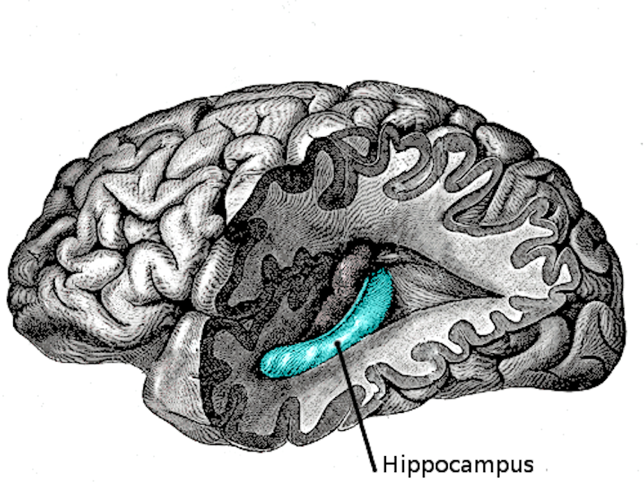 Explainer: what happens in the hippocampus?