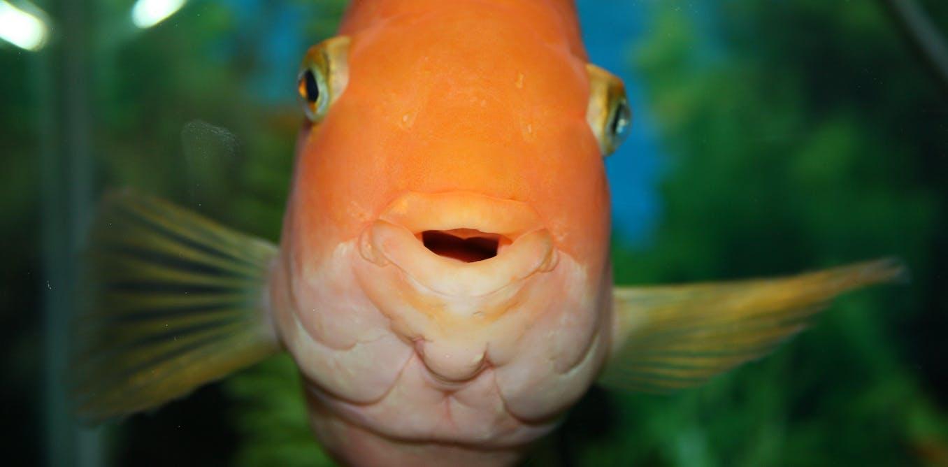 Fish penis bone #8
