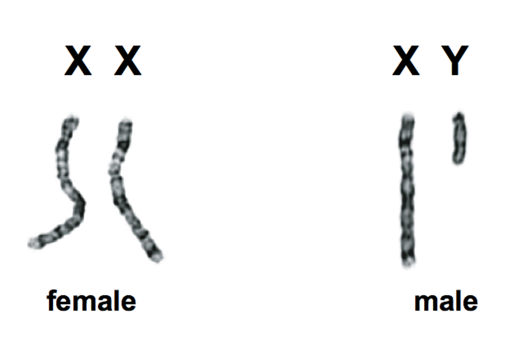 yy sex chromosomes in Independence