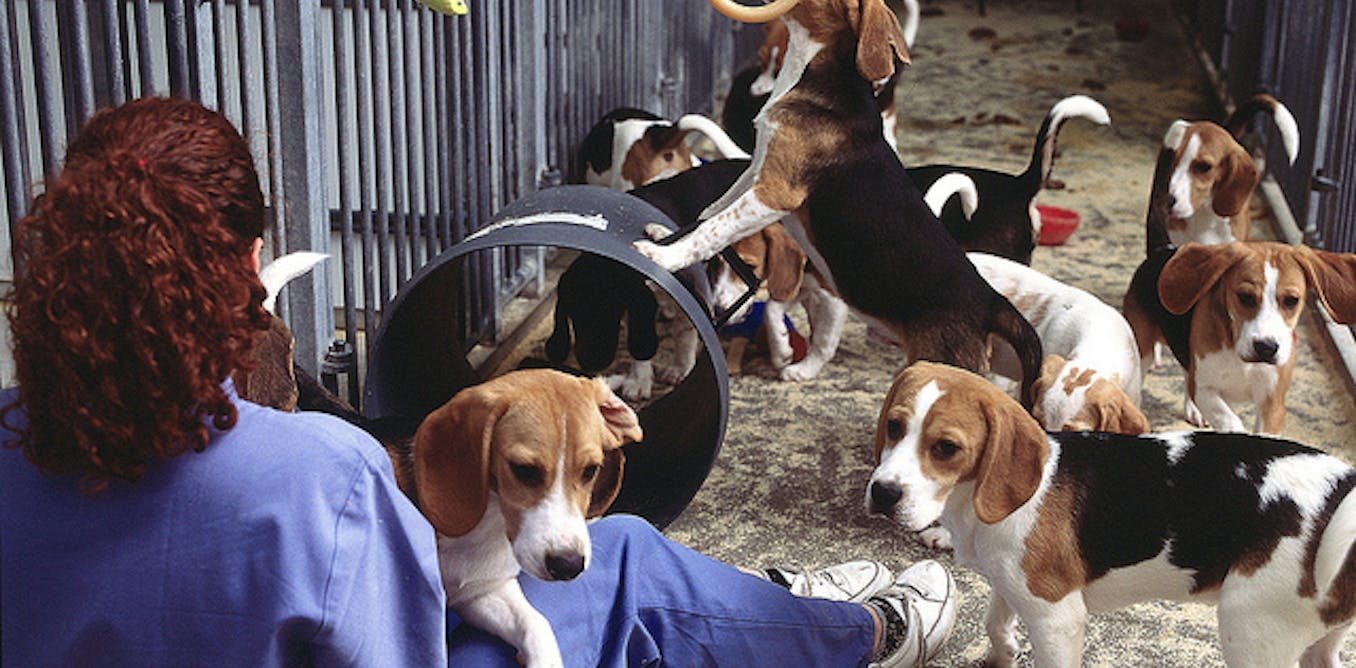 a research on vivisection Vivisection: vivisection, operation on a living animal for experimental rather than healing purposes more broadly, all experimentation on live animals it is opposed.