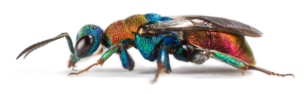Insects are the great survivors in evolution: new study