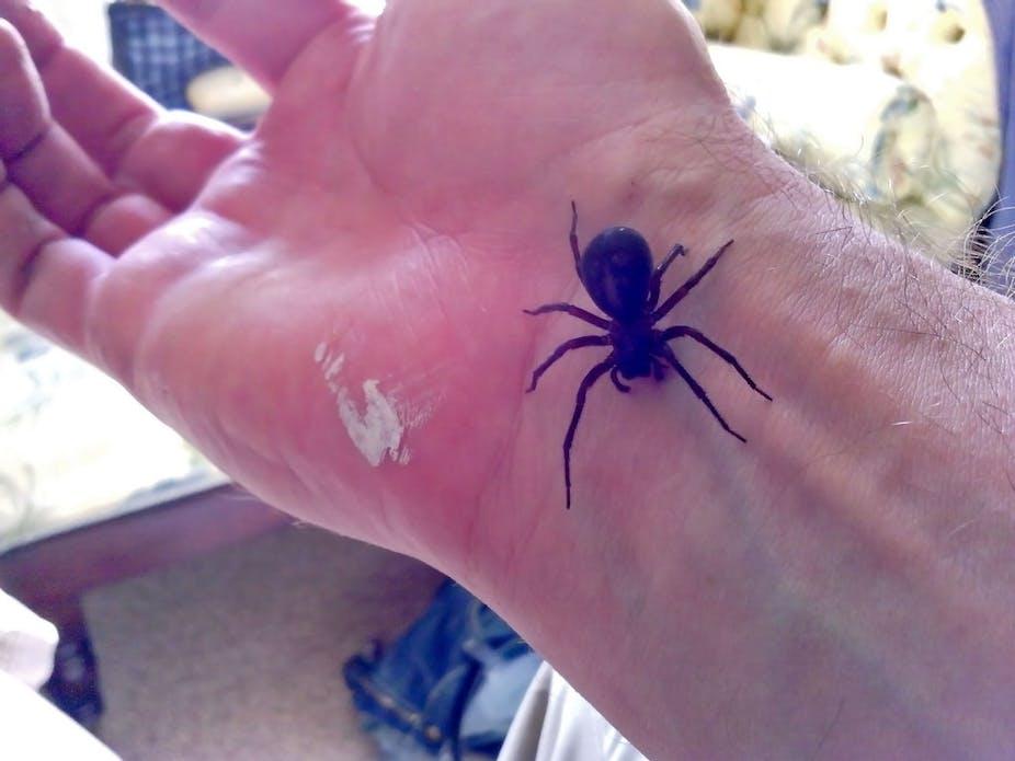 False Widow Death Was A Tragedy But It Wasn T Spider