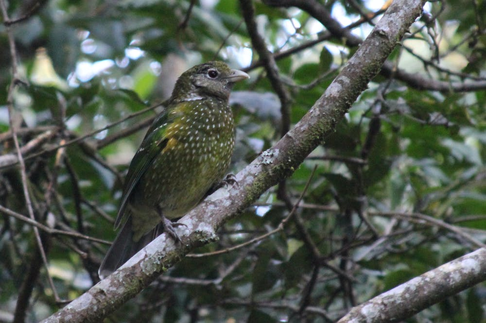 Six extraordinary Australian birds you need to see