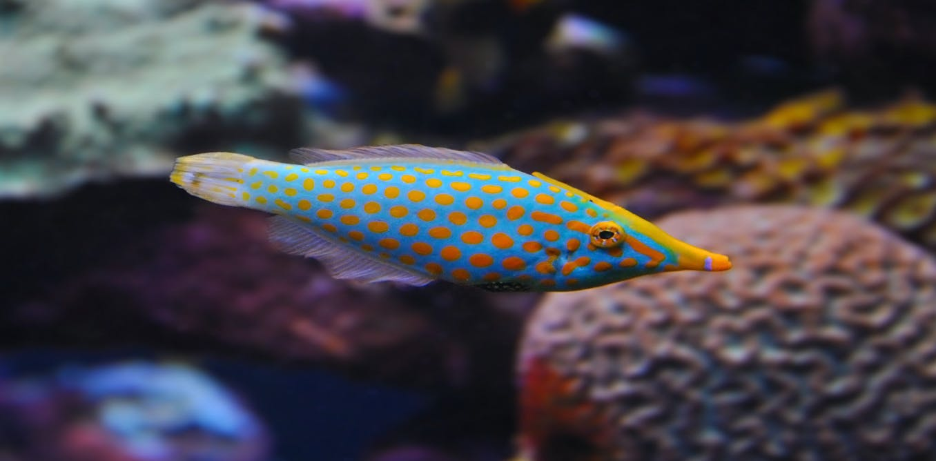 Reef fish can even smell like coral as they seek to evade for I smell like fish