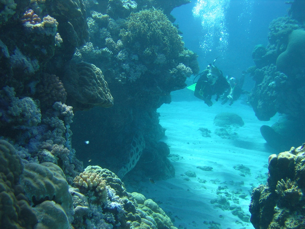 the dangers surrounding coral reefs Dangers of sunscreen to humans and corals reefs  because skin cancer is the  most common form of cancer in the united states, protecting.