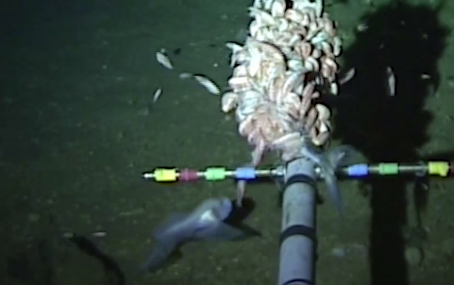 How we found world's deepest fish in the Mariana Trench