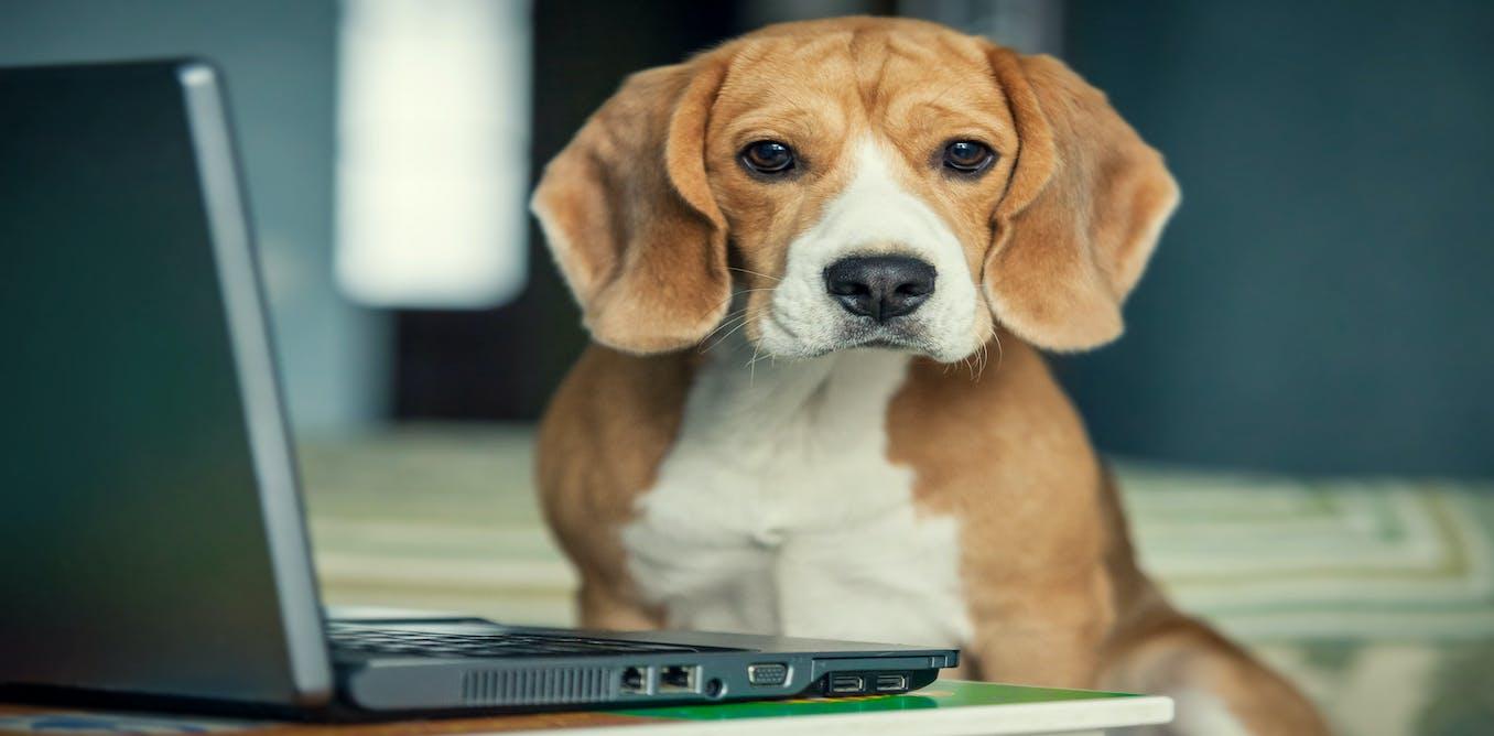 Can A Dog Get Alzheimer S Disease