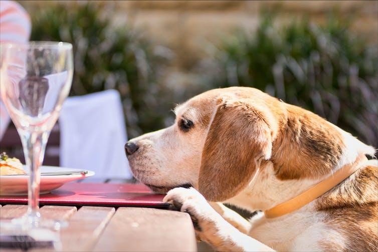Can Dogs Get Alzheimer S Disease