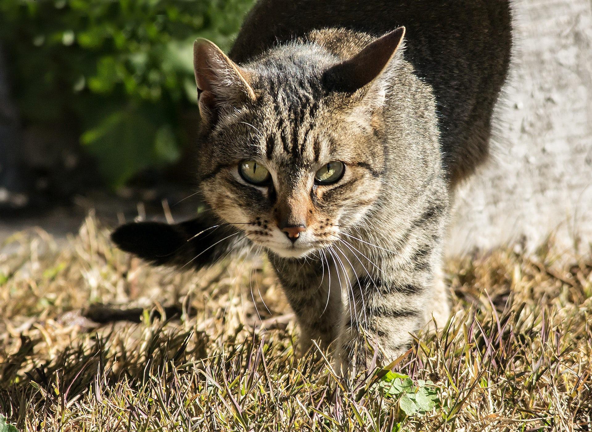 feral cat caretakers coalition los angeles