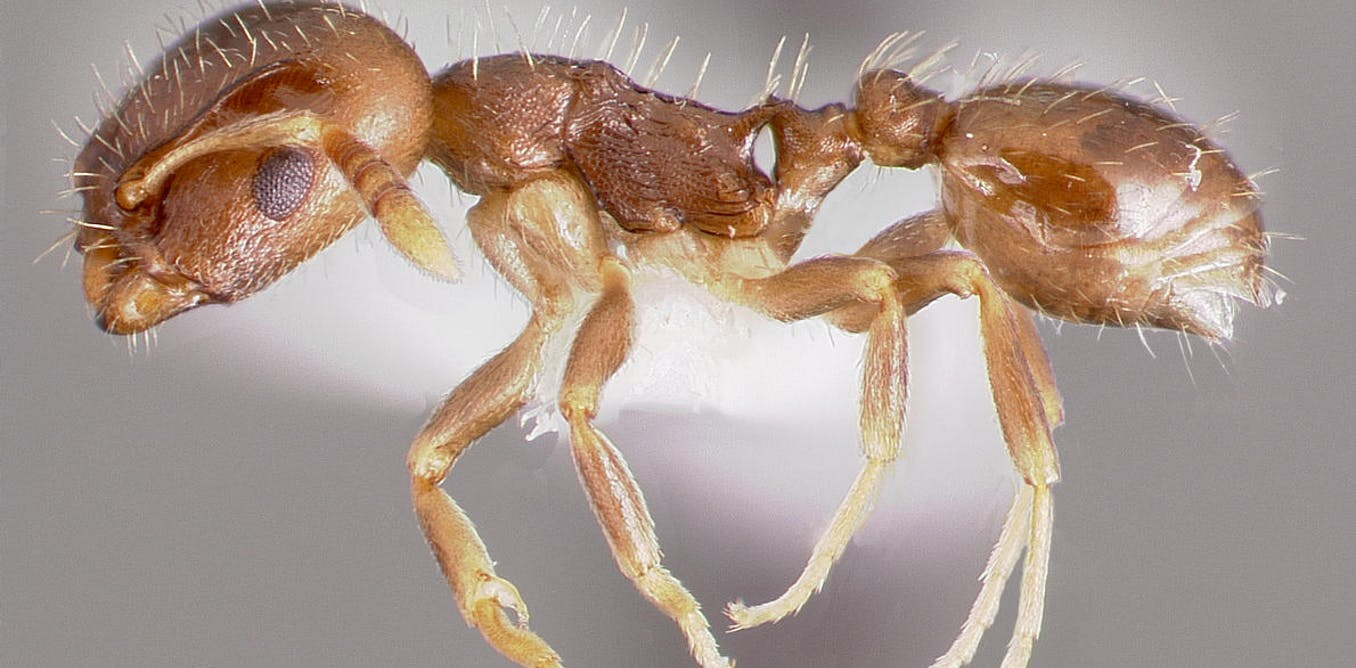 slave ants and their masters are locked in a deadly