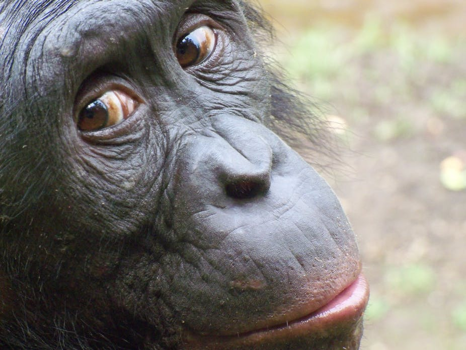 apes make irrational economic decisions that includes you