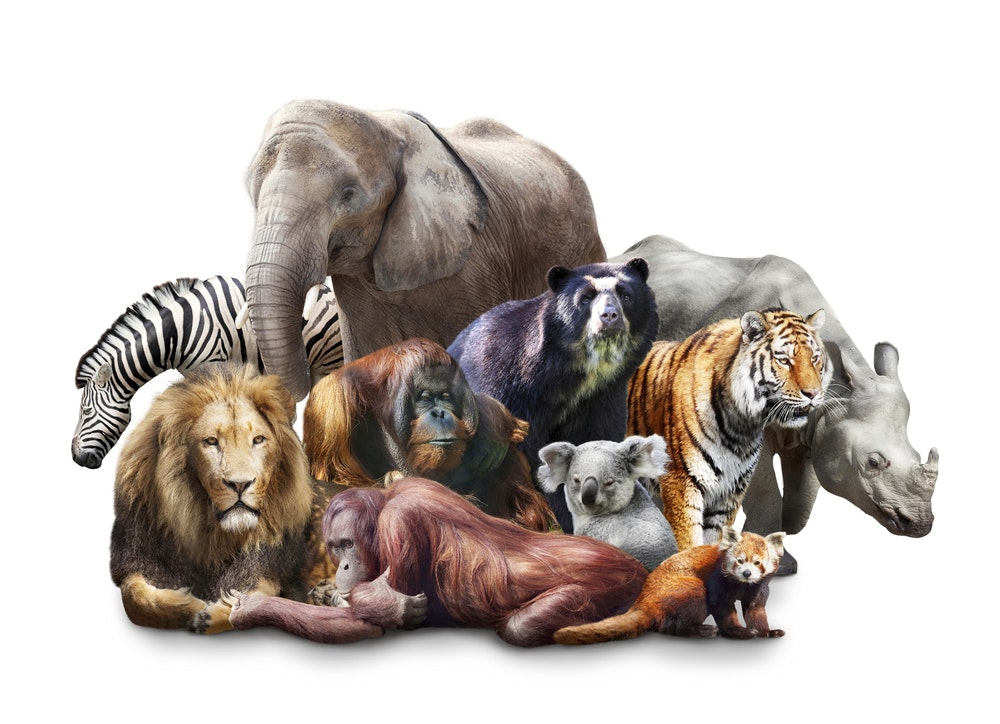 We Re All Mammals So Why Do We Look So Different
