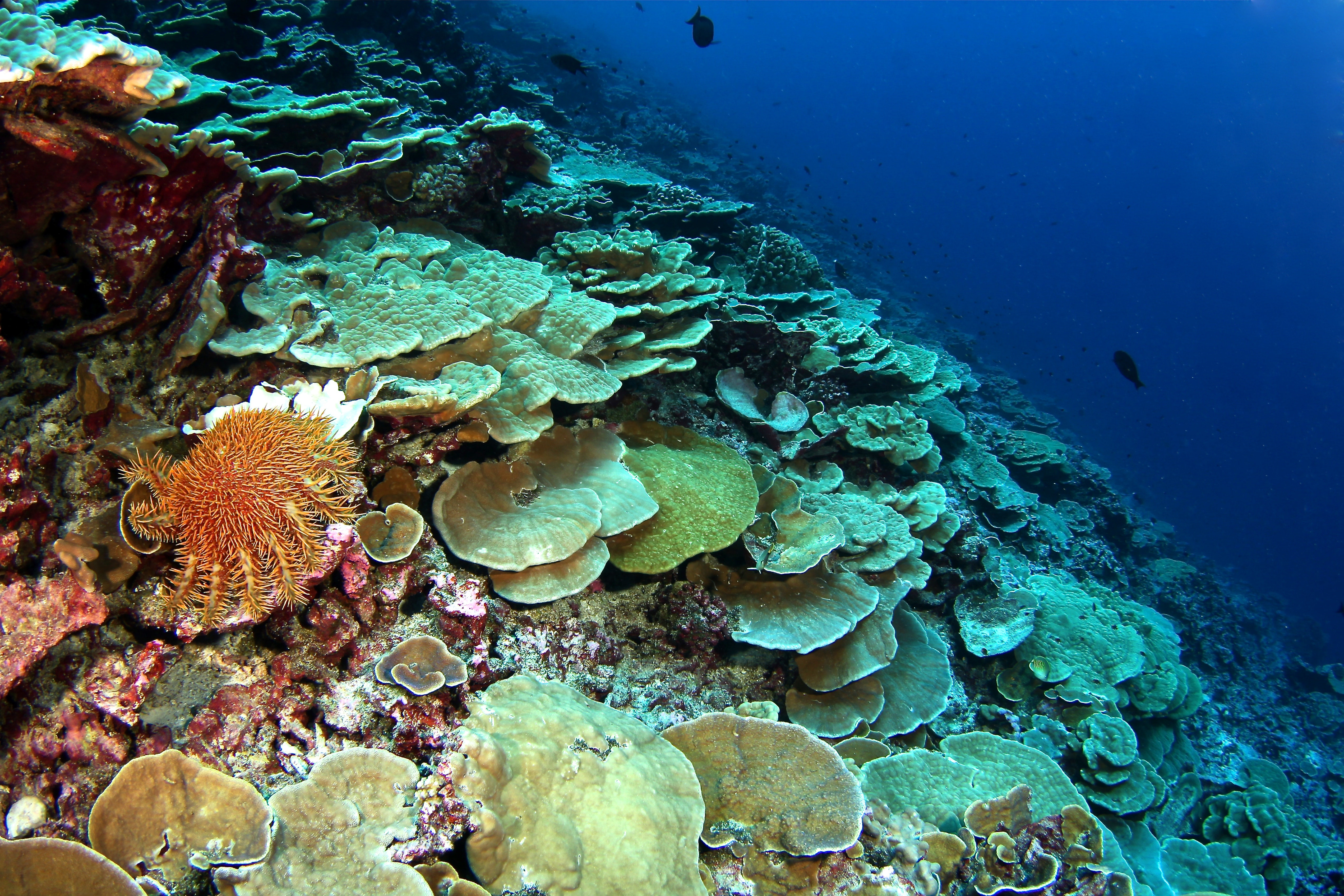 The environmental factors that affect the growth of coral reefs