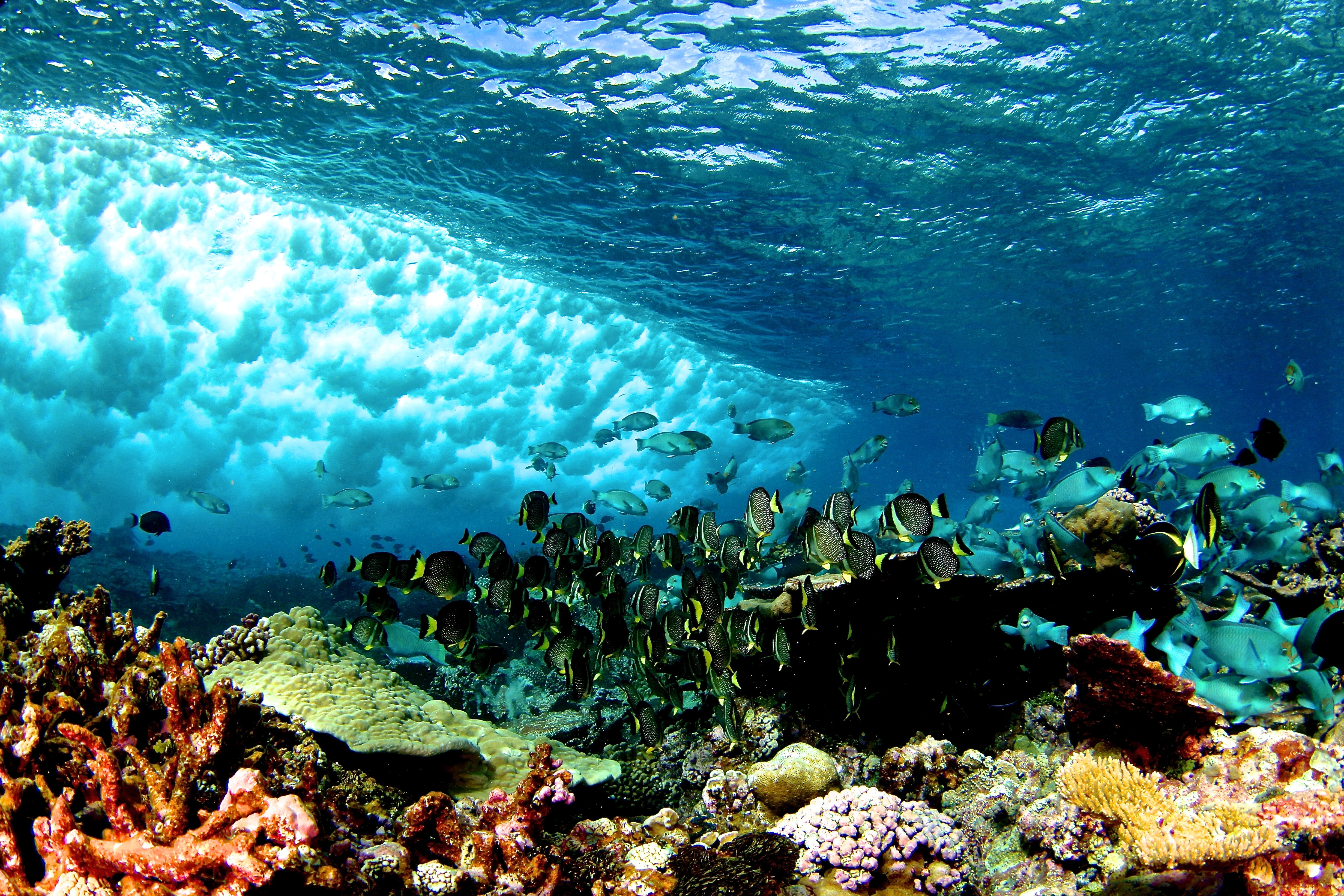 what will happen if coral reefs are destroyed