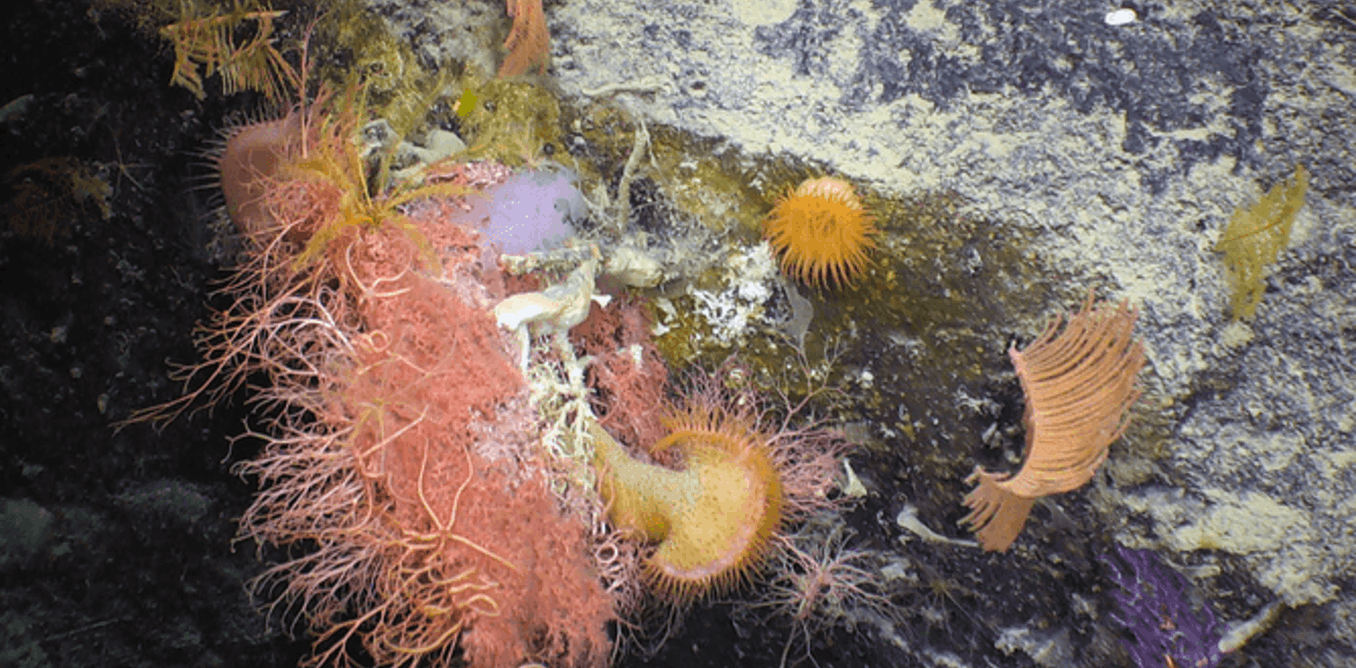We are finally learning the perth canyons deep sea secrets nvjuhfo Images