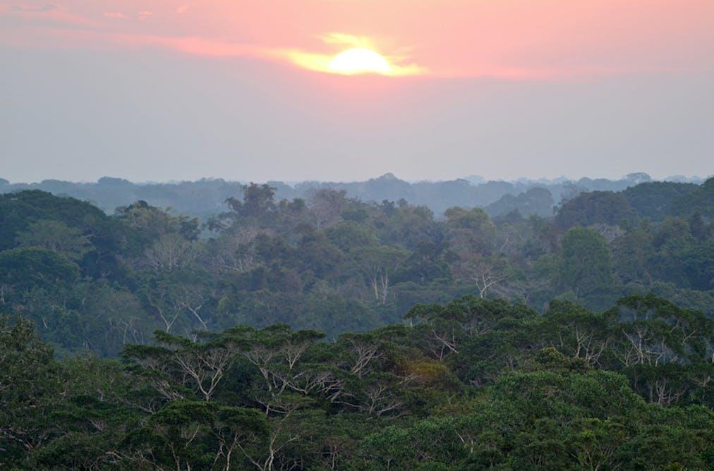 amazon general environment