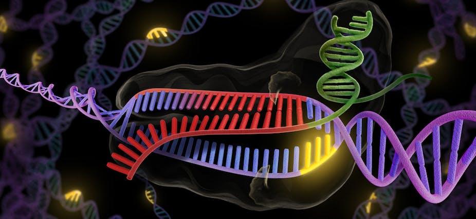 Explainer: CRISPR technology brings precise genetic editing