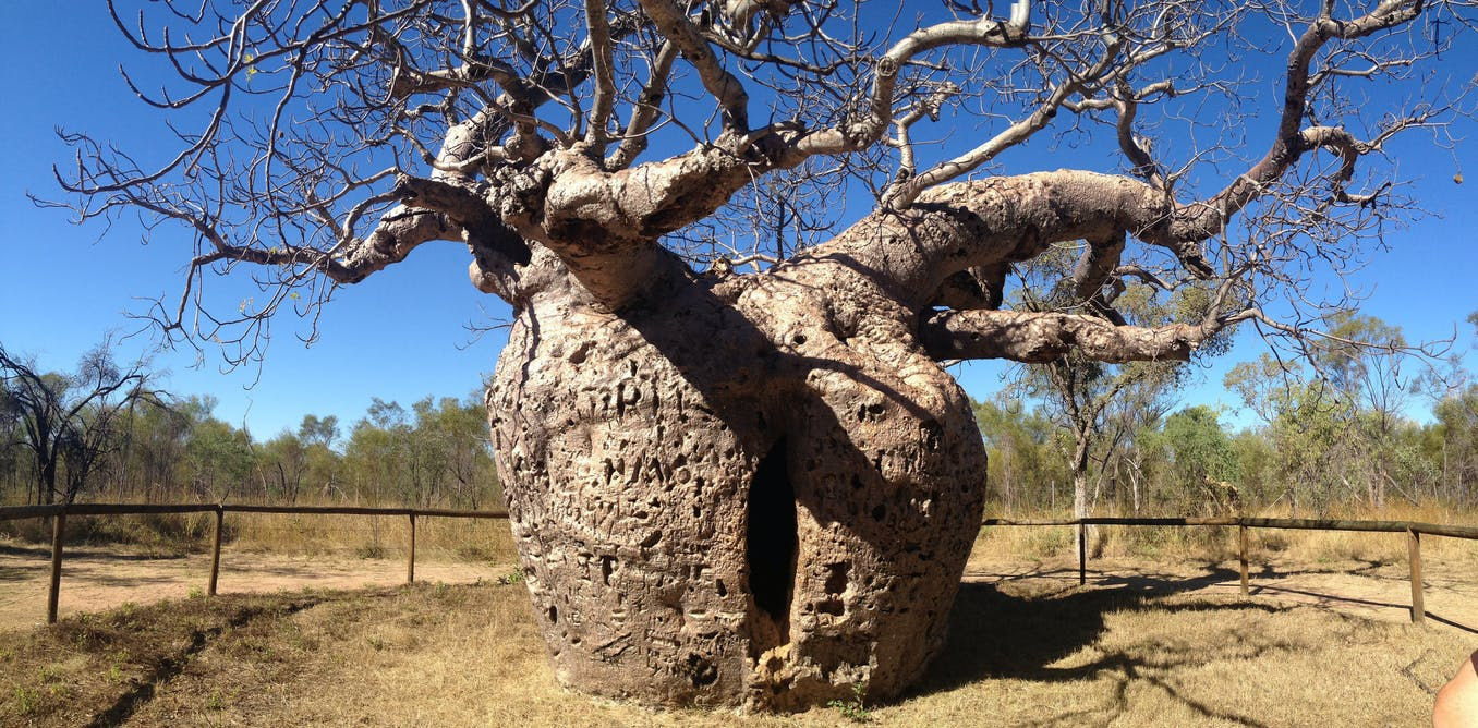 how to say tree in aboriginal