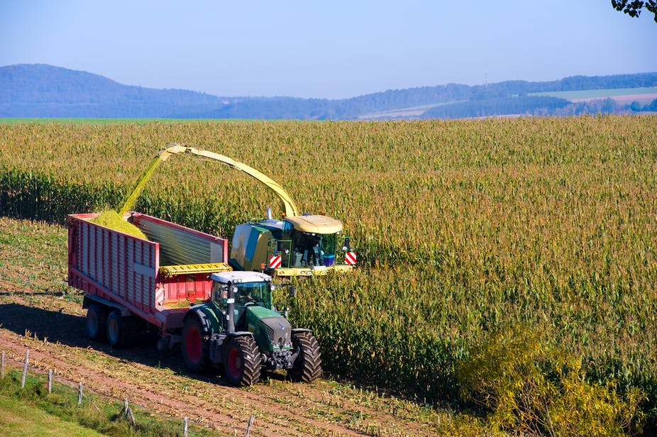Industrial corn farming is ruining our health and ...