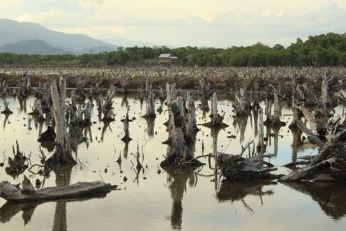 Indonesia's vast mangroves are a treasure worth saving