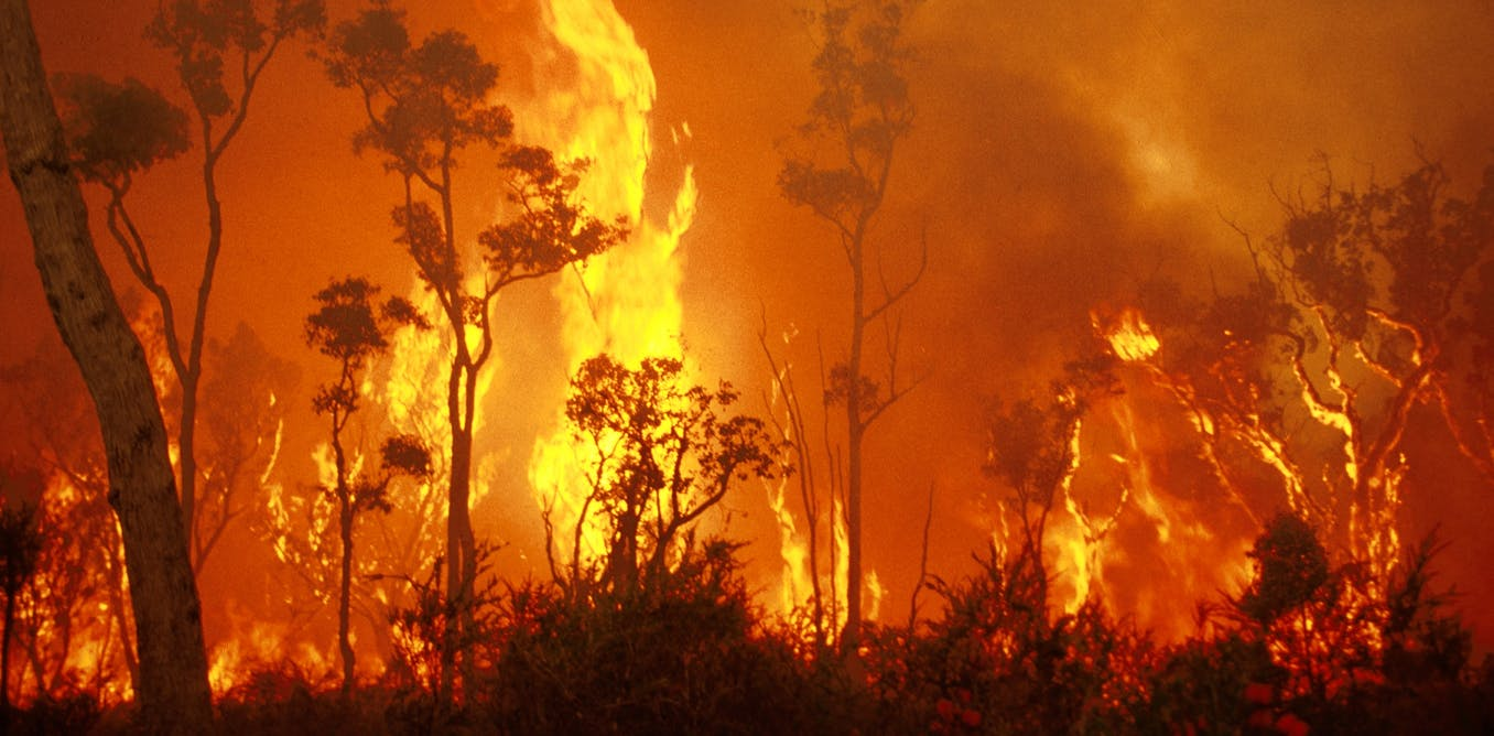bright spark saves lives  finding order in the chaos of bushfires
