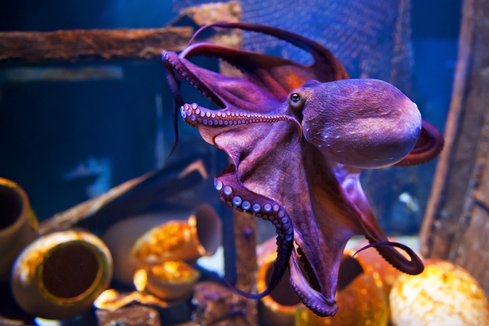 how we made an octopus