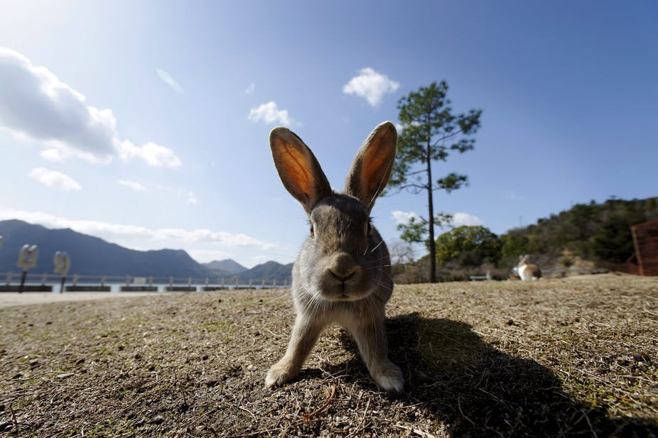 Controlling rabbits: let's not get addicted to viral solutions