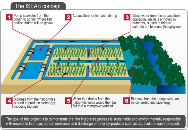 Desert Farms Could Power Flight With Sunshine And Seawater