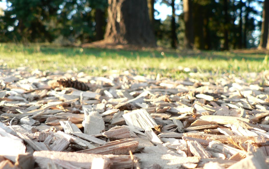 Woodchips sound unsustainable, but they're not as bad as you