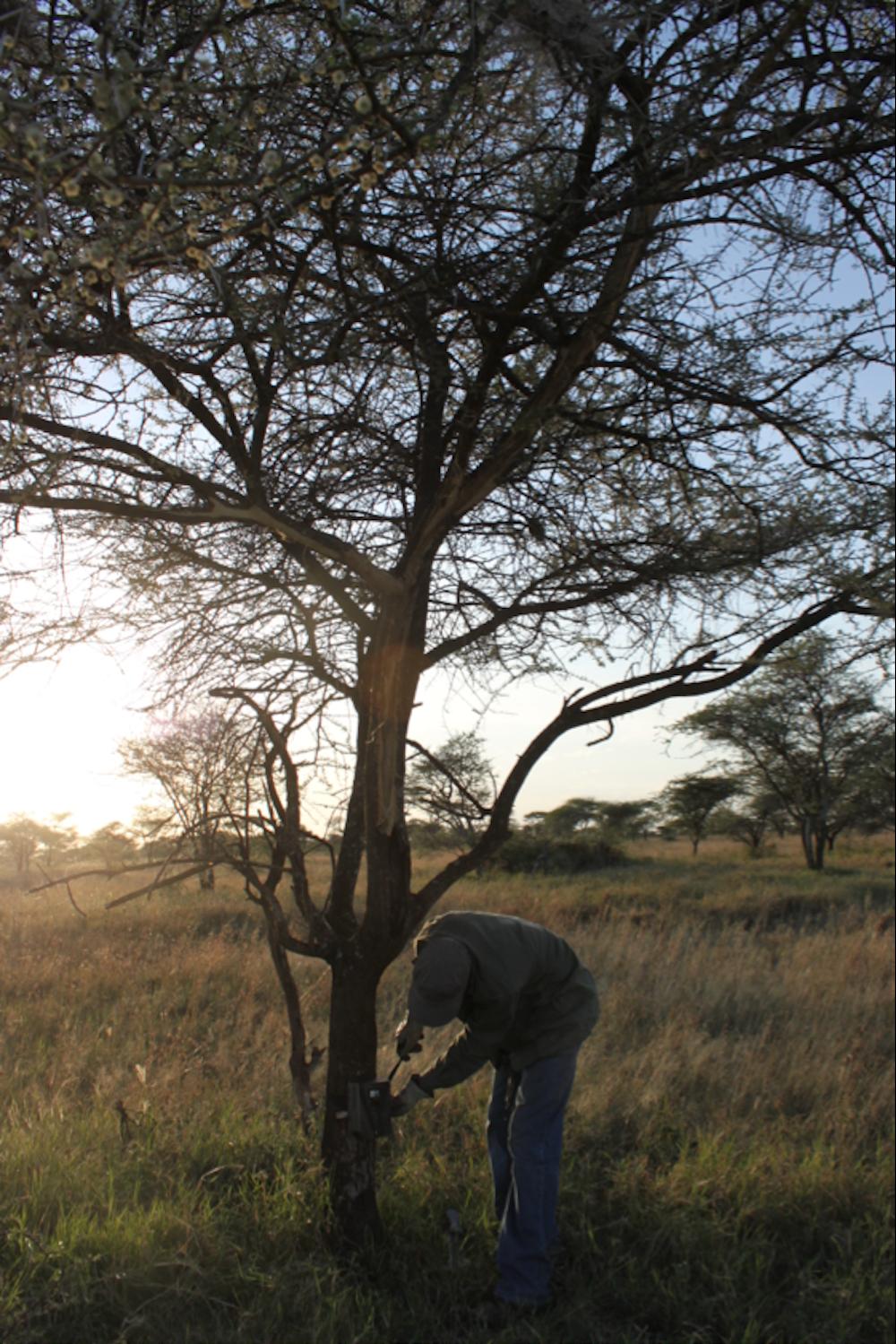 Crowdsourcing the Serengeti: how citizen scientists