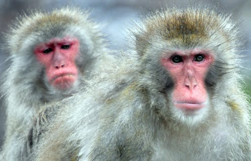 Monkey minds: what we can learn from primate personality