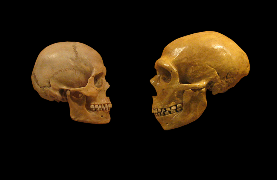 Jaw Bone Discovery Reveals More About Secret Sex Lives Of