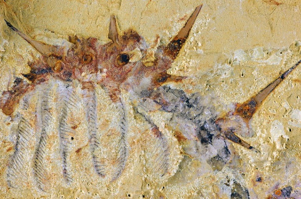 The rise and demise of a super-armoured 'monster worm' from ancient China