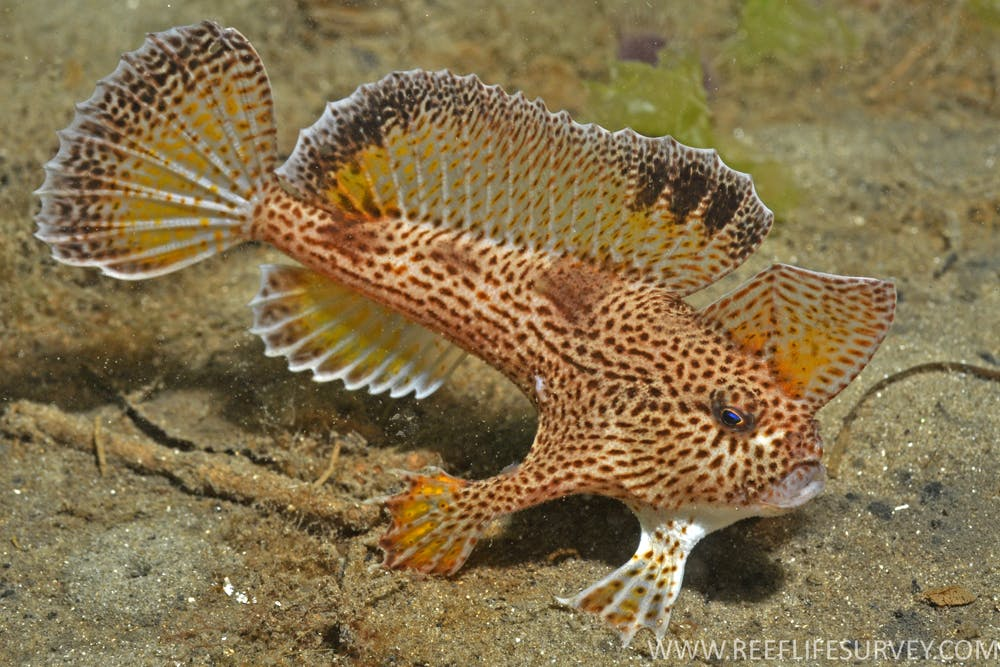 Following Nemo: marine life is heading south