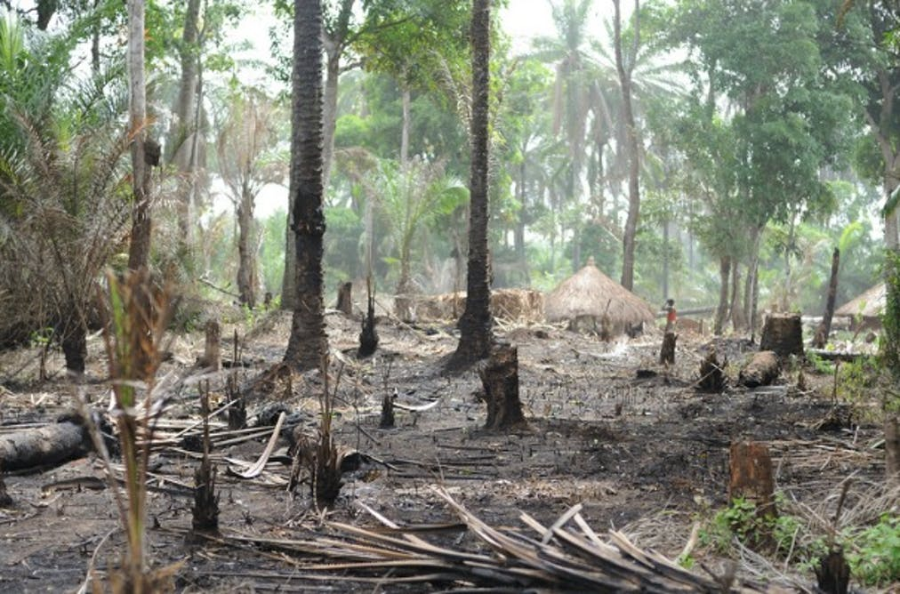 Deforestation an alert from the islands of so tom and prncipe africas forests may be our last chance to slow climate change publicscrutiny Images