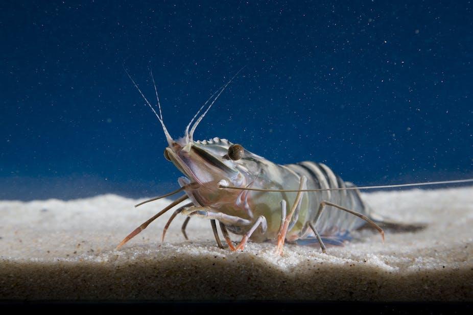 How shrimp farming wreaked havoc on Sri Lanka's coasts