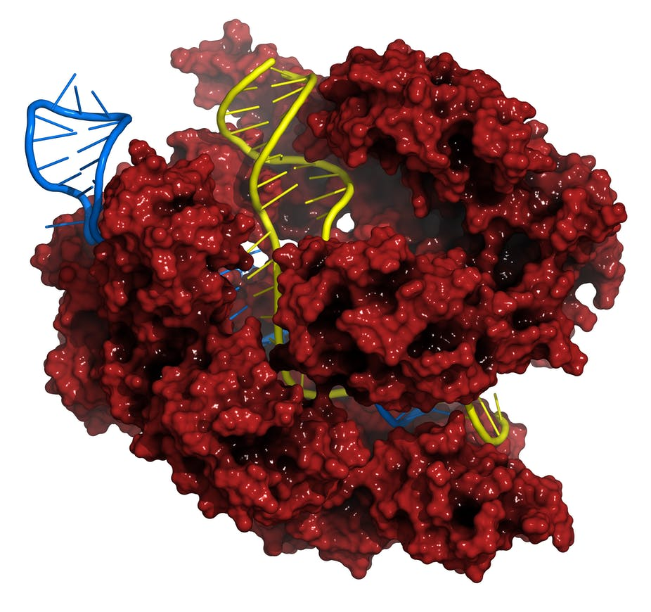 crispr cas gene editing technique holds great promise but crispr cas gene editing technique holds great promise but research moratorium makes sense pending further study