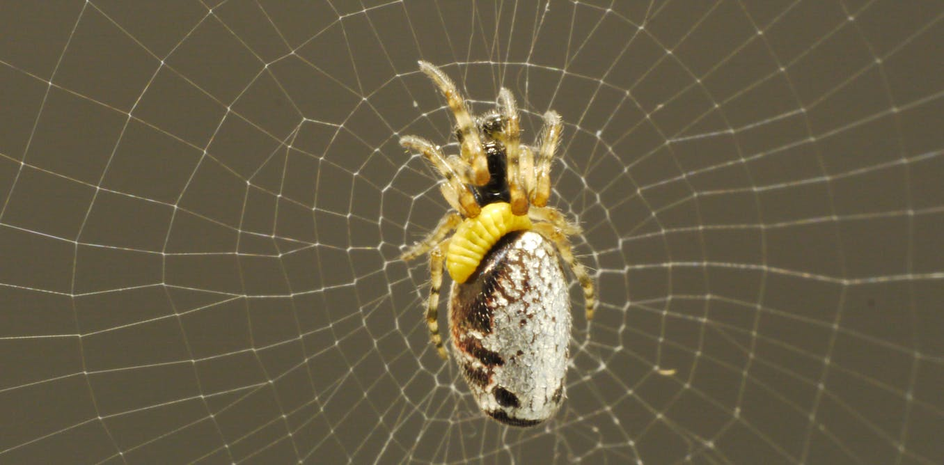 Mind-controlling wasps enslave zombie spiders to build them a ...
