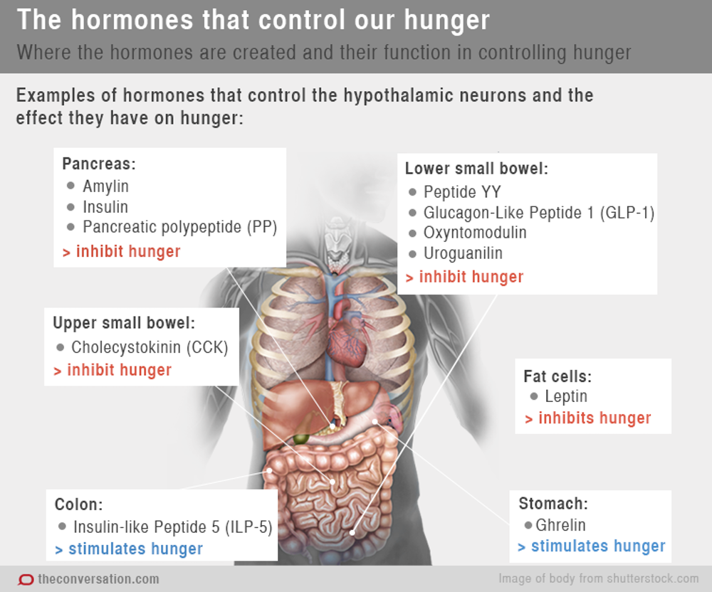 Chemical Messengers How Hormones Make Us Feel Hungry And Full