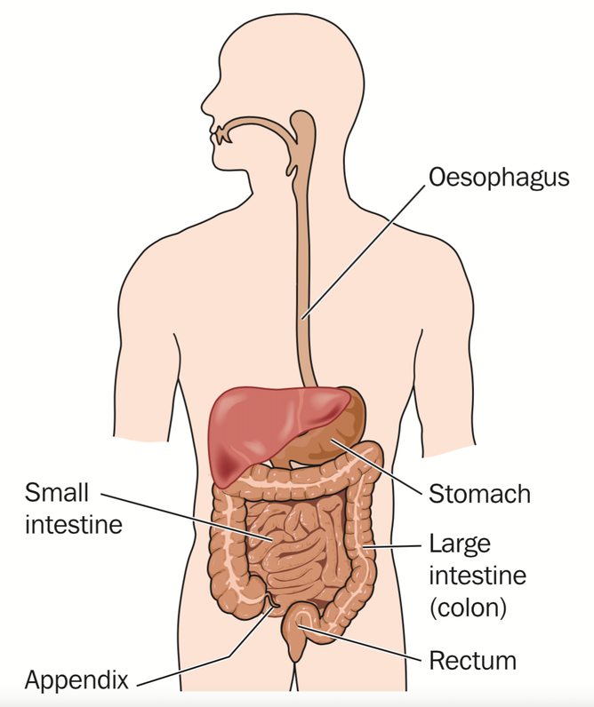 So You Think You Have Ibs Coeliac Disease Or Crohn S